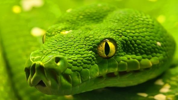 green_snake_25267